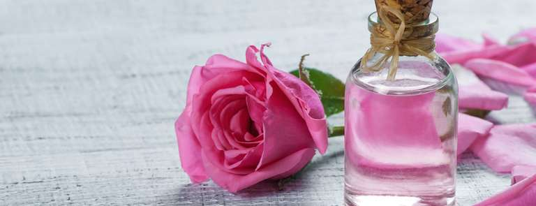 a pink rose and rosewater