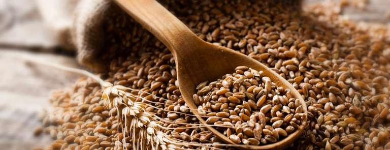 A spoonful of barley grains