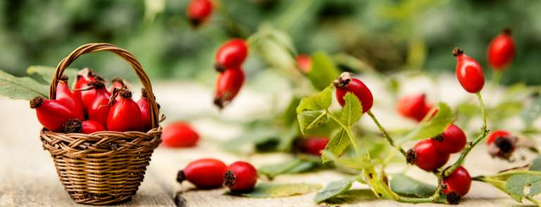 rosehip buds in basket and on branch
