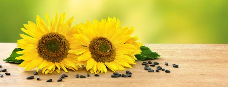 sunflowers on table with seeds