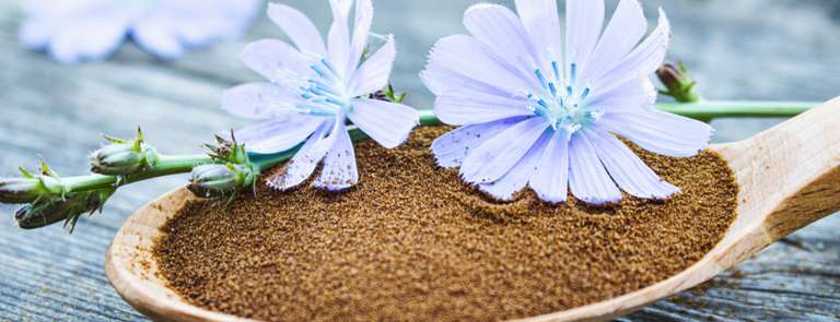 chicory root powder inulin