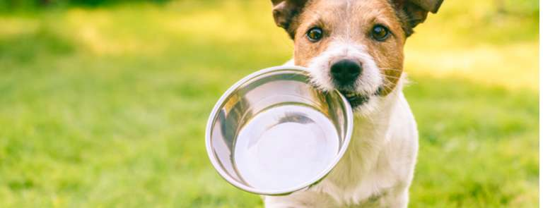dog running with empty food bowl in mouth